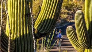 Arizona: Sonoran Desert & Saguaro National Park