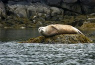 Maine-bike-tours-active-vacations-seal-Acadia-800x600