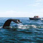 Sojourn-Cape-Cod-Bike-Tours---Whale-Watching