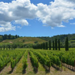 Sonoma Wine Country Bike Tour