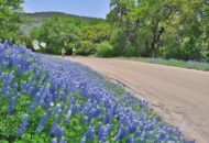 Texas bluebonnets along a Sojourn Texas bike tour