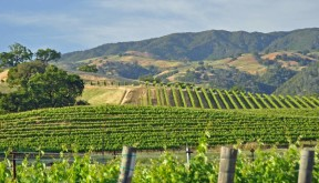 Wine Country California Bicycle Tours late day light