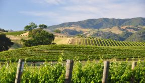 Sonoma wine bicycle tour