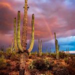 Southern Arizona: Sonoran Desert & Saguaro National Park