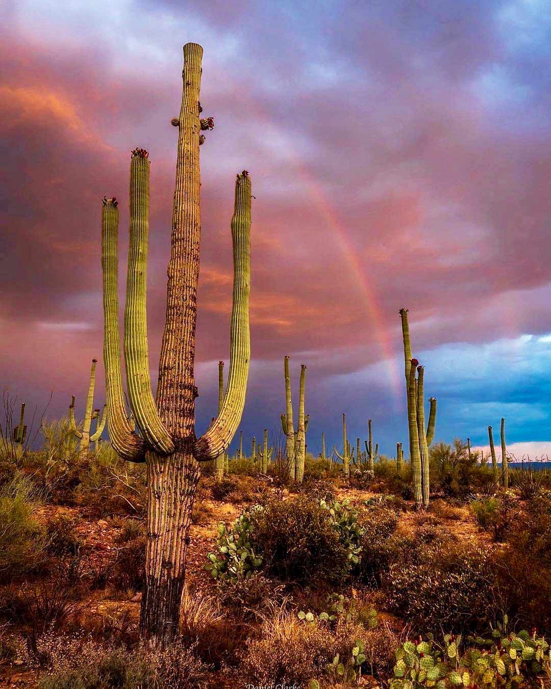 Southern Arizona Bike Tour: Sonoran Desert & Saguaro National Park