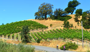 California: Sonoma Wine Country
