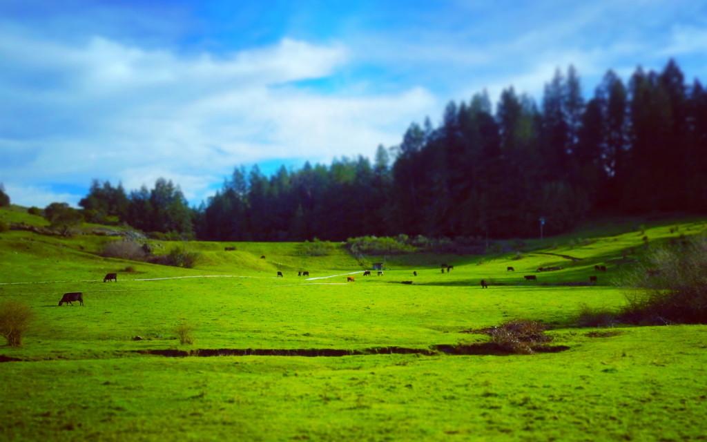 Verdant farmland in Sonoma Wine Country