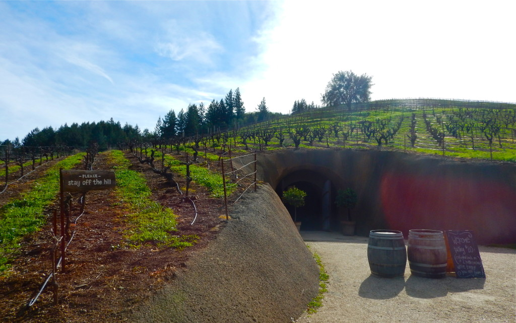 Grape vines cover the hill atop the Bella Wine Caves