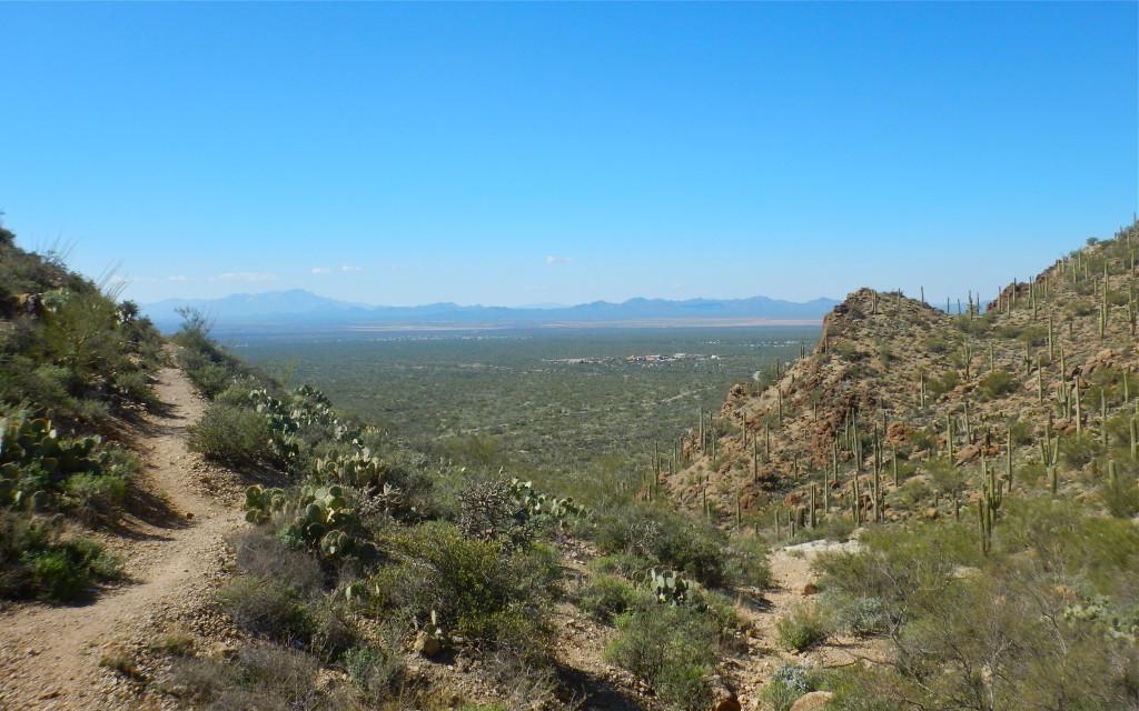 Saguaro West from atop Gates Pass