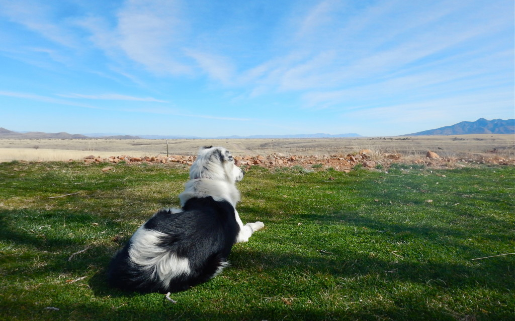 Lori at Sonoita Vineyards has a collection of wonderful rescue dogs that greet visitors to the winery.