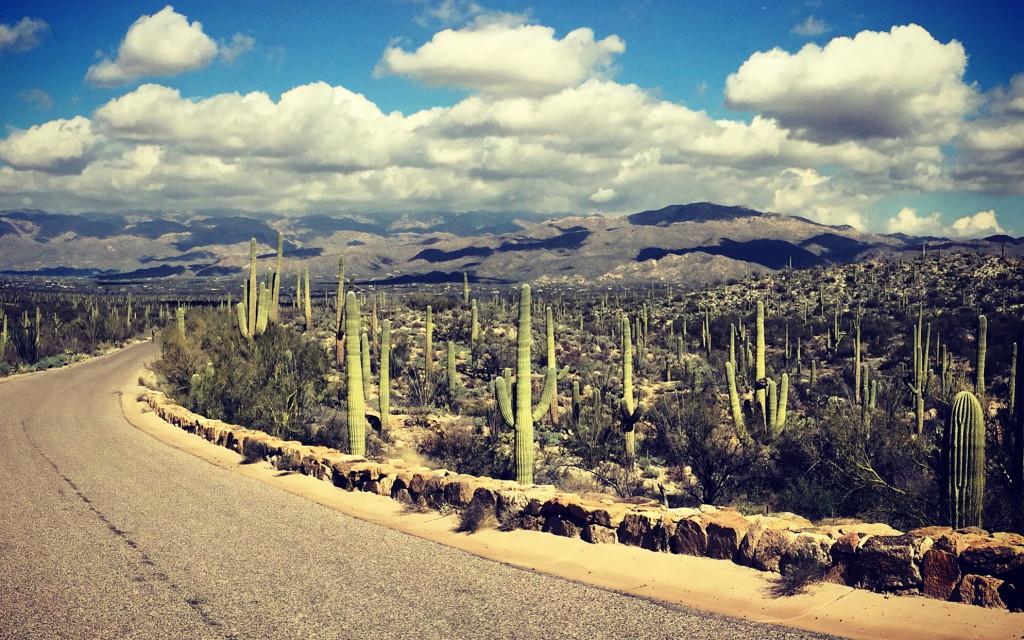 The Loop Road in Saguaro National Park East