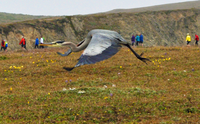 Sojourn guests hiking with a great blue heron