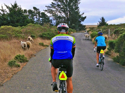 Sojourn cyclists dodge sheep during summer cycling vacations in California