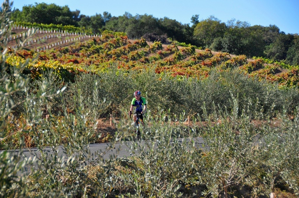 Sojourn cyclist riding through wine country on a bike tour with grape vines on the hillside