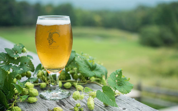 helles and hops at trapp brewery
