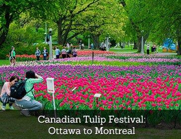 Canadian Tulip Fest