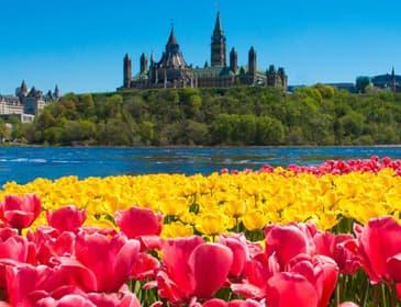 Ottawa Tulip Fest
