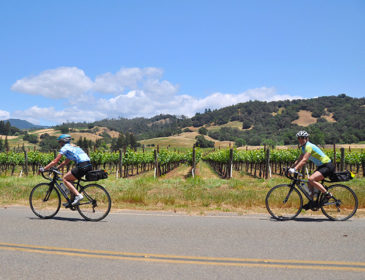 Wine and Bike